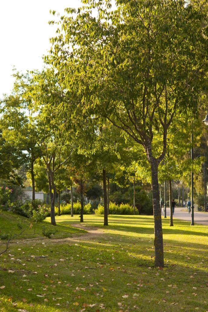 alberi 0145